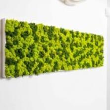 Green Mood Zielone ściany dekoratorstwo Warszawa
